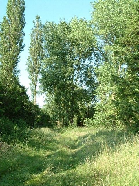 Poplars and hidden pool