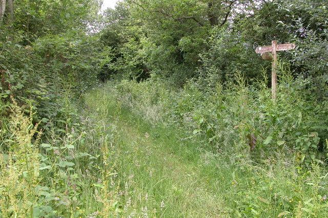 Herefordshire Trail near Brilley