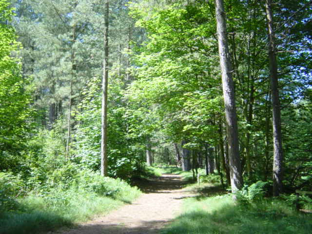 Woodland Path, Ainsdale
