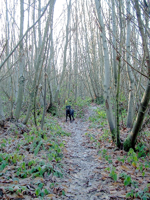 Kilndown Wood - Christmas Day