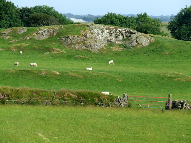 Grazing sheep near to rock outcrop