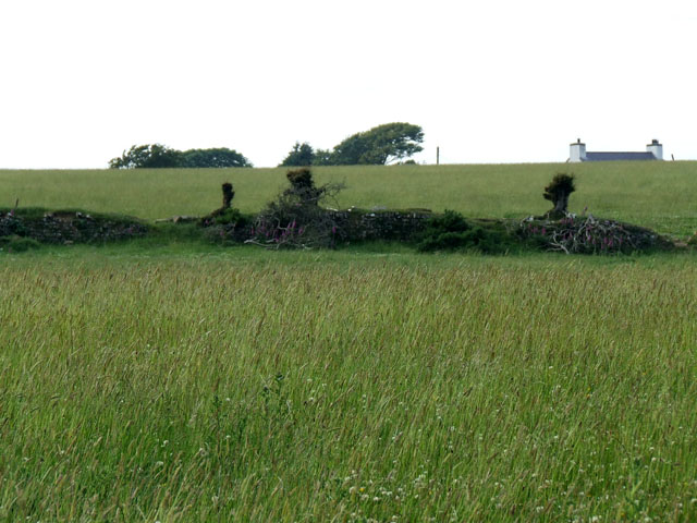 Field at Bryncryd