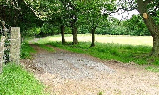 Public Bridleway Along Track, Cow Close