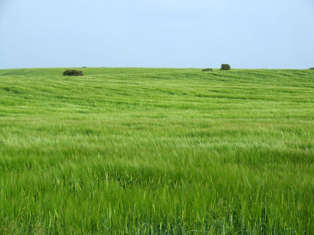 A Green field in the countryside