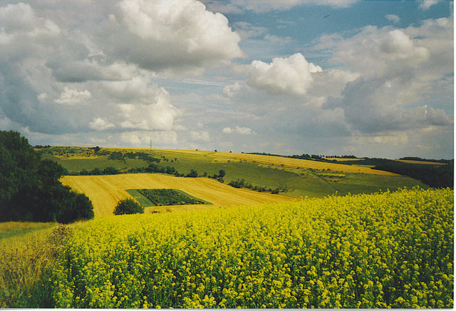 Downland, west of Combe, Berkshire.