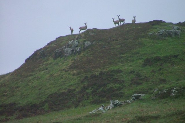 Red Deer, Cruach Slèibhe