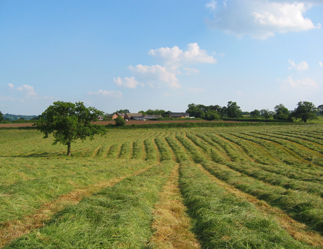 New-mown hayfield by Bickley Hall Farm