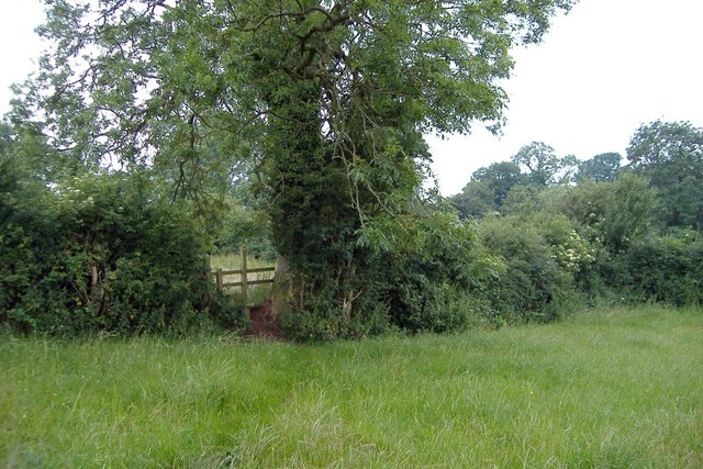 Rushton - stile by the ash tree