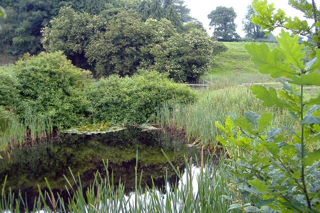 Pond beside footpath, Rushton