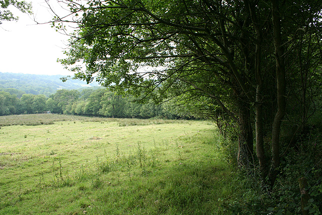 Dunkeswell: the edge of Bywood Copse
