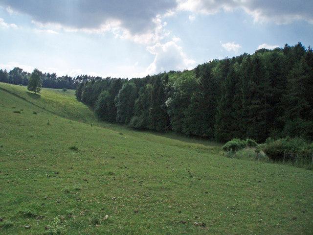 Lamphill Wood