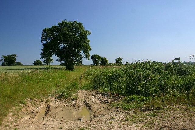 Saddler's Lane, Rede