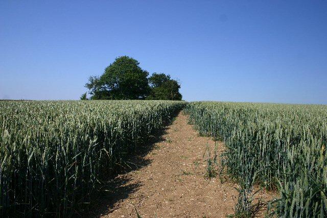 Footpath near Cresslands Farm