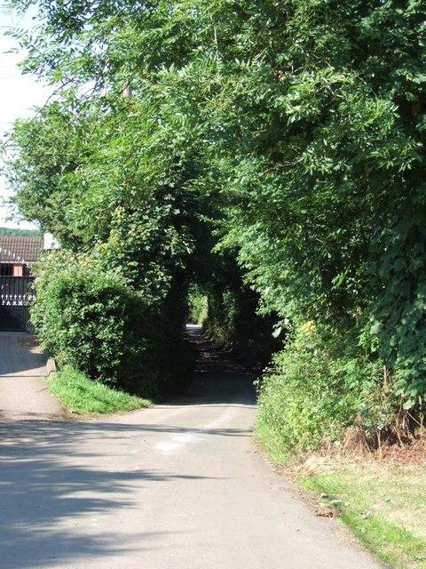 Hollick's Lane - Southern End