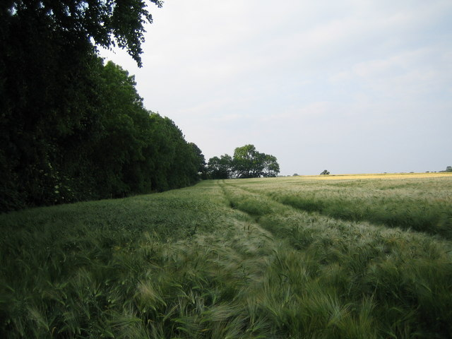 Beadale Wood viewed from public footpath