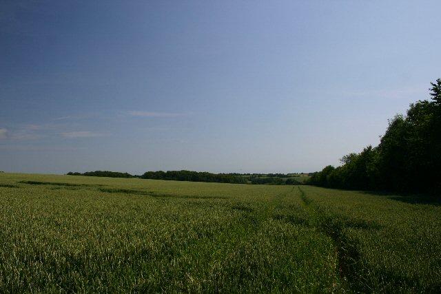 Dutmoss Woods, near Hawstead Green