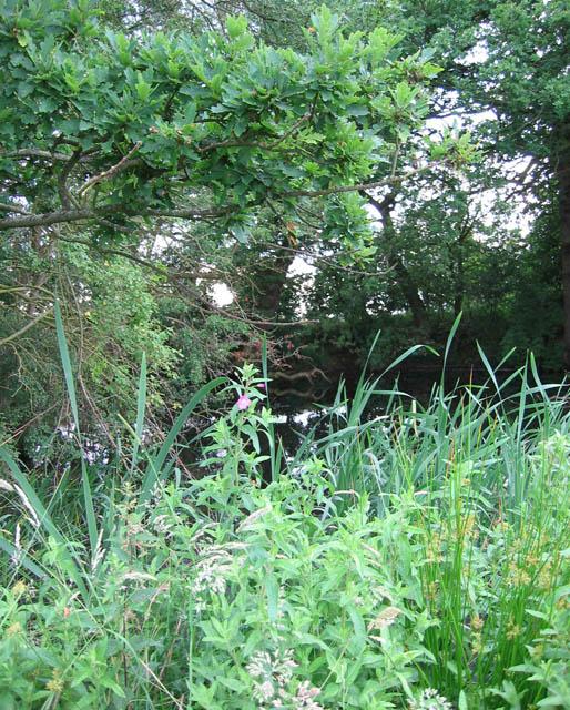 Mere near Fir Tree Farm