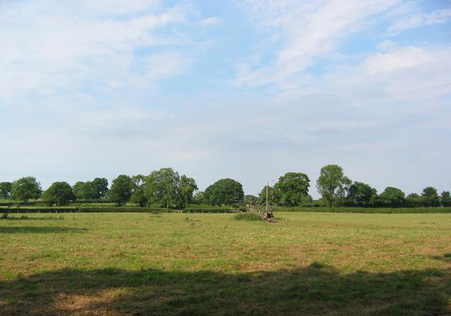 Pastureland at New Woodhouses