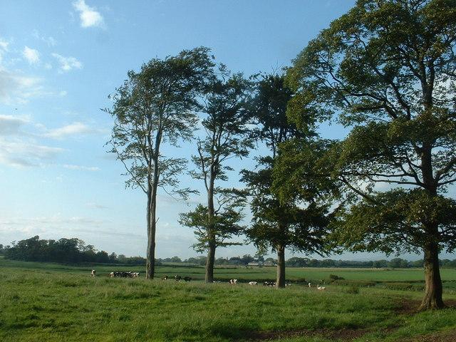 Wag Hill, near Garstang
