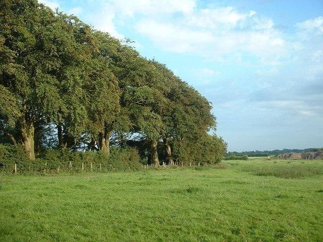 Wag Wood, near Garstang