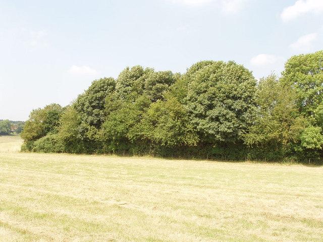 Spinney near Hyde Heath