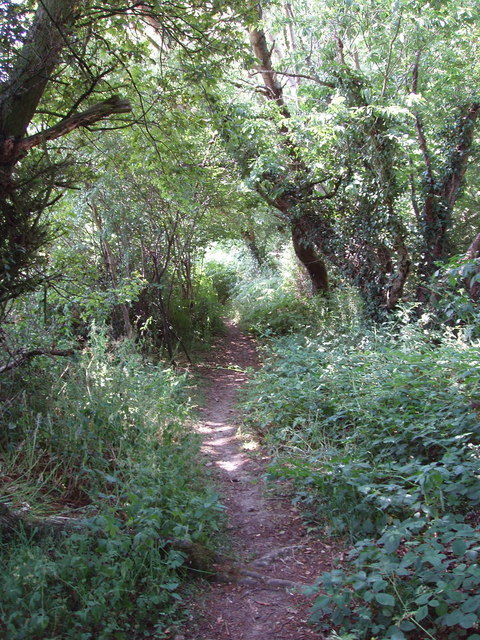 Footpath through belt of woodland, near Hyde Heath