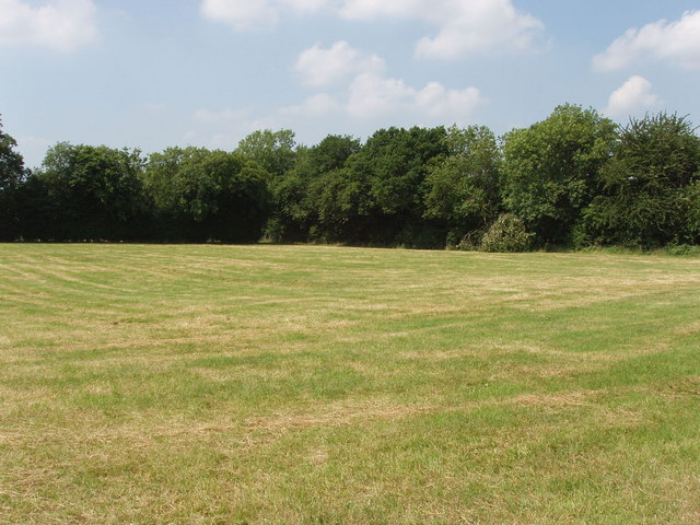 Mown field, hedge and trees.
