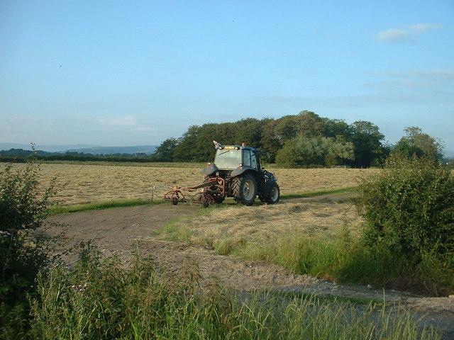Haymaking near Buttfield Wood