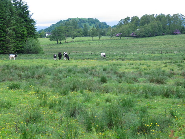 Grazing land near Balquhain.