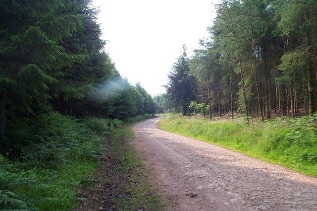Bridleway in Croydon Hill Forest