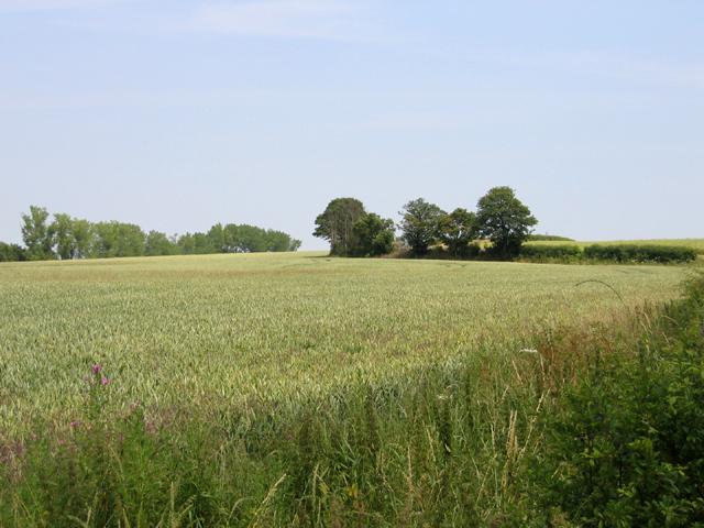 Farmland view towards Higham Gobion, Beds