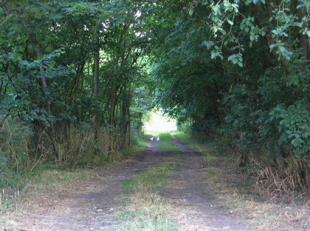 Woodland beside Clophill Road, Gravenhurst, Beds