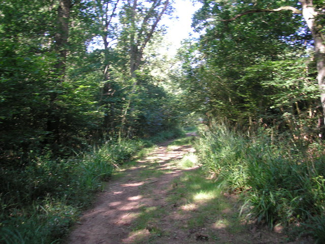 Footpath through Newtye Hurst, Kent