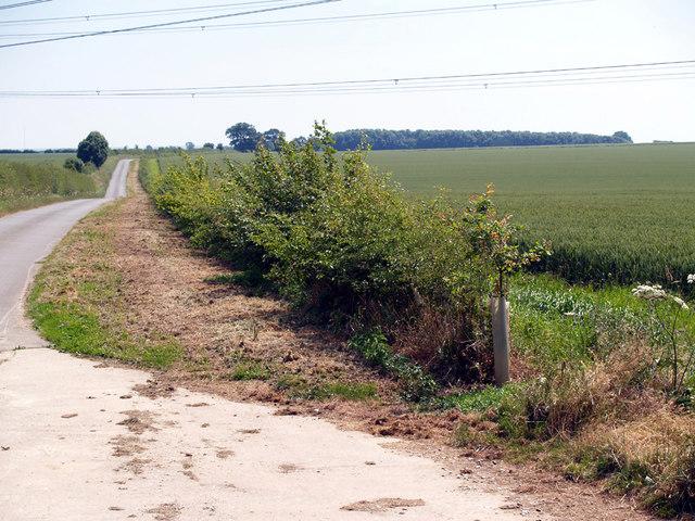 Hedge Development