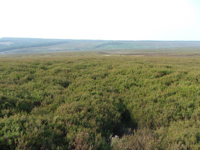 Wheeldale Moor above Sod Fold Slack.