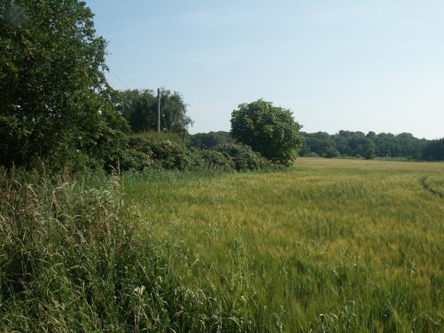 Farmland near Thurne