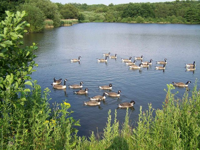 Lake in Hazelslade Local Nature Reserve