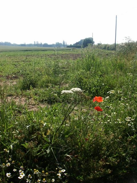 Farmland, Oby