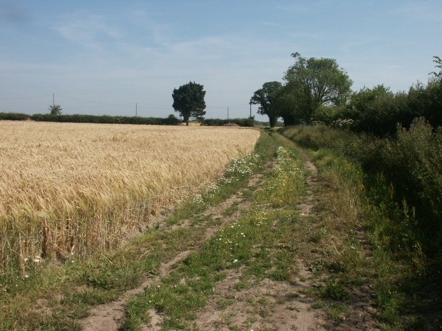 Track, near Thurne