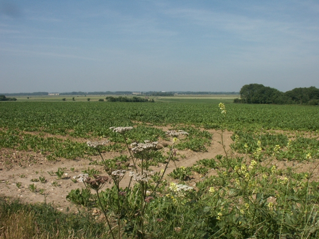 Farmland, Billockby