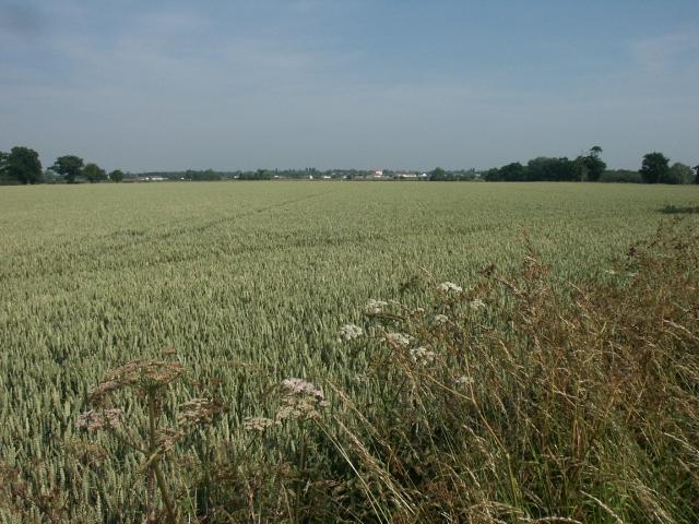 Farmland, near Repps