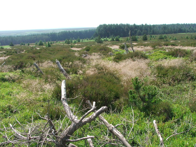 Forestry Clearance in Wheeldale Plantation.