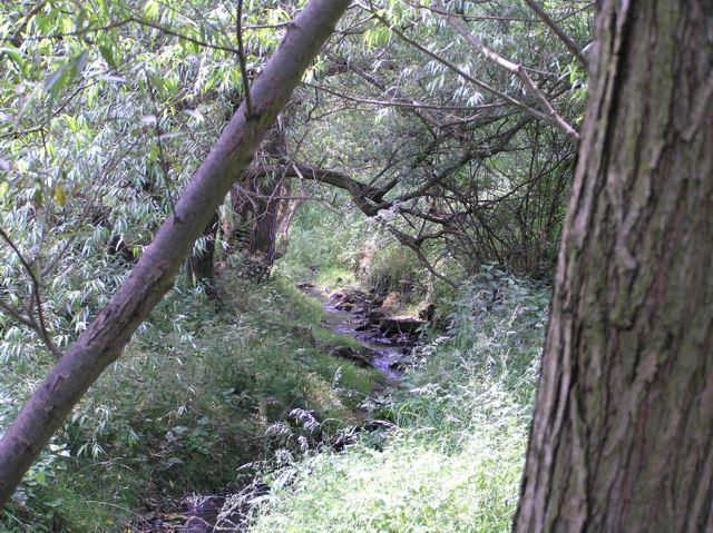 Shire Brook