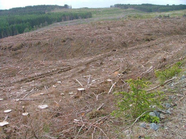 Clear Felling, Ardmore Forest