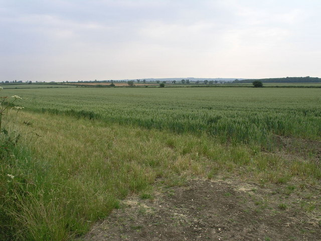 Fields and Copse