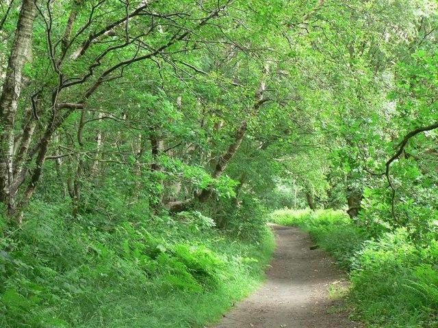 Footpath in Clayton Woods, Ireland Wood
