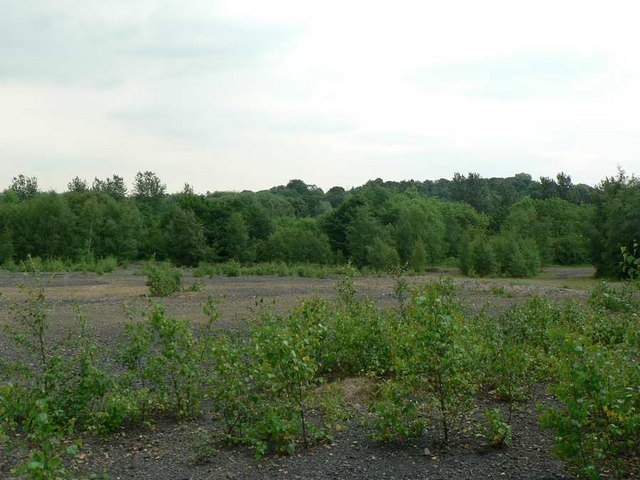 Disused tip with birch saplings, Calder Grove