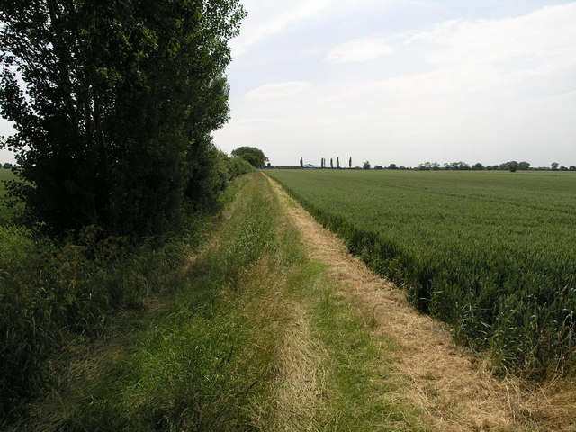 Hedge Track Field