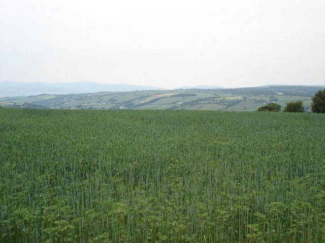 Crops and hills