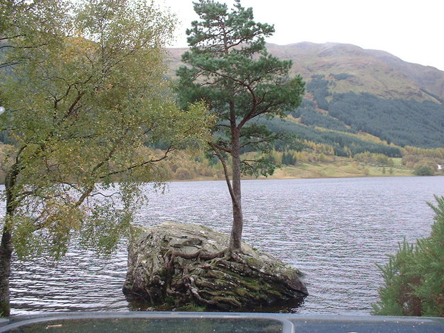 Tree Growing in Rock in Loch Voil